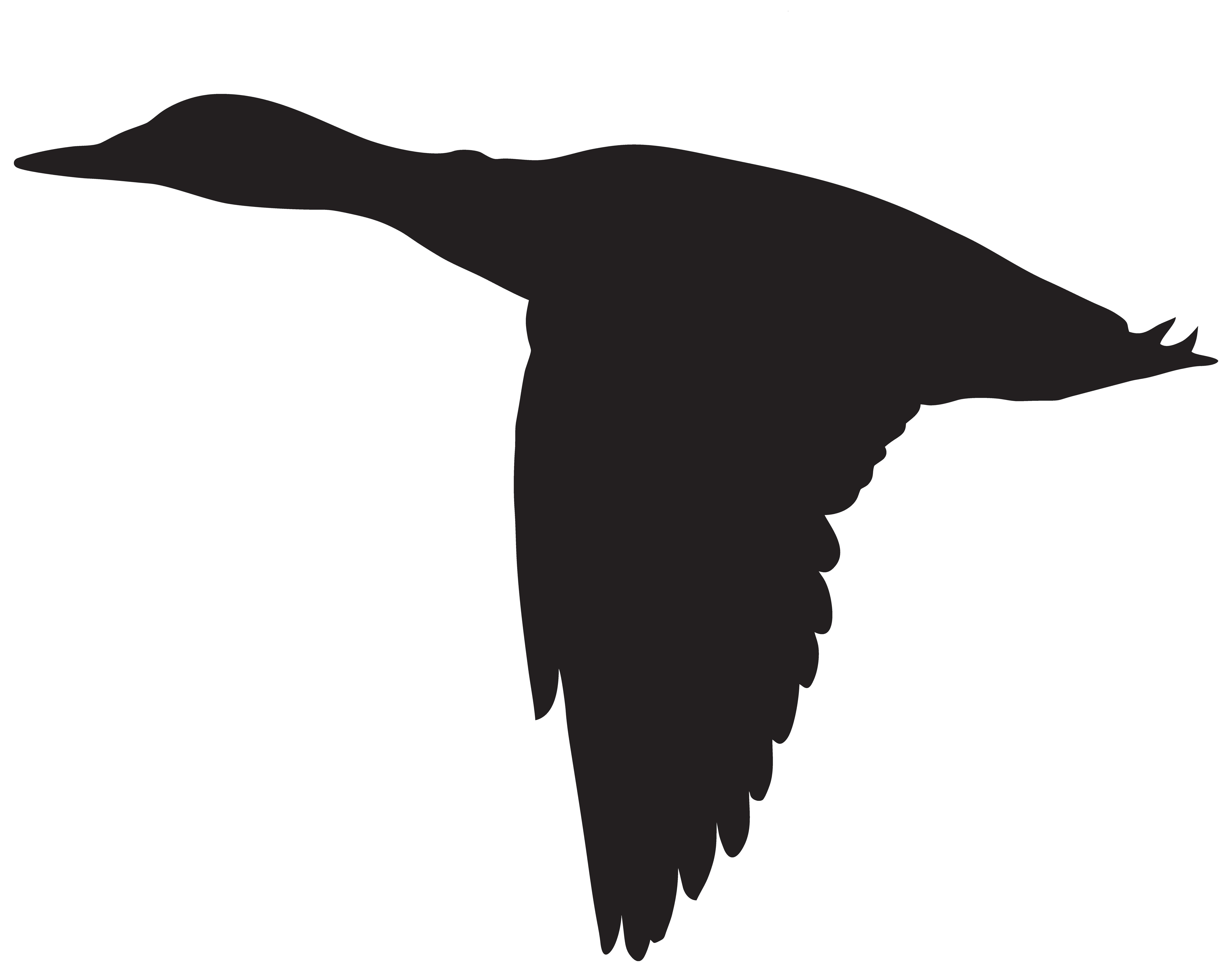 Duck Flight Goose Mallard Bird.