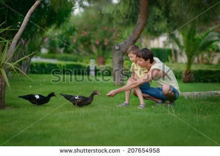 feed_the_ducks