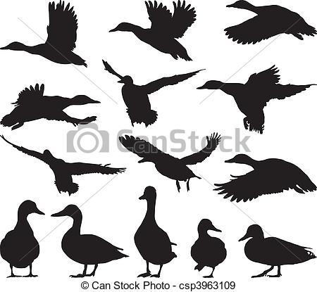 Mallards Clipart and Stock Illustrations. 665 Mallards vector EPS.