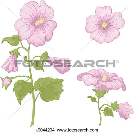 Clipart of Flowers mallow, isolated k9044294.