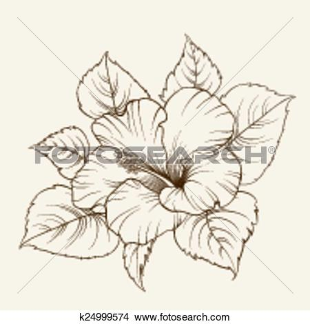 Clipart of Flower of mallow. k24999574.