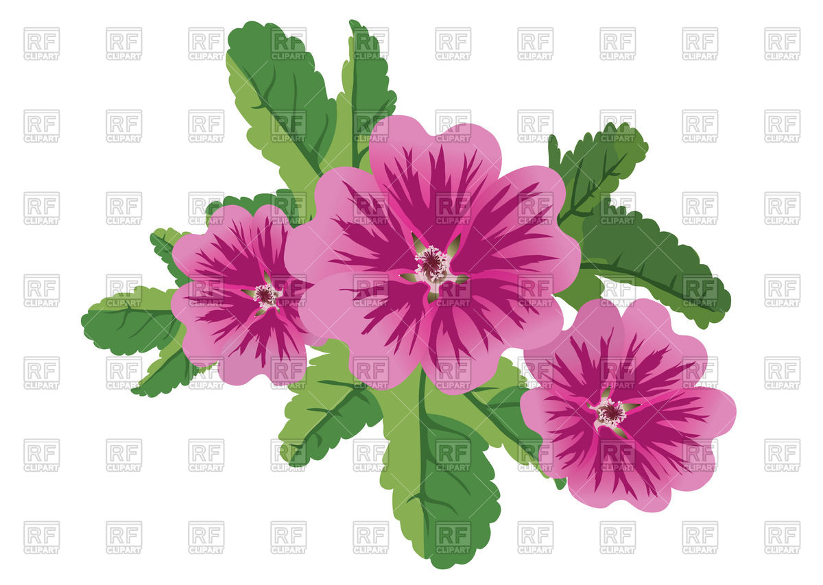 Flowers of mallow Vector Image #64898.