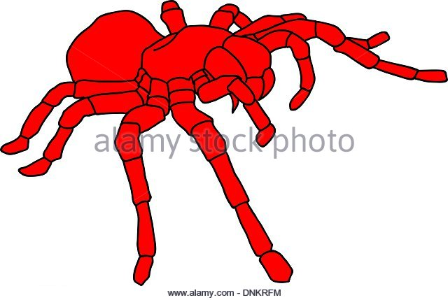 Cobweb And Widow Spiders Stock Photos & Cobweb And Widow Spiders.