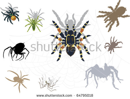 Theridion Malmignatte Vintage Engraved Illustration Natural Stock.