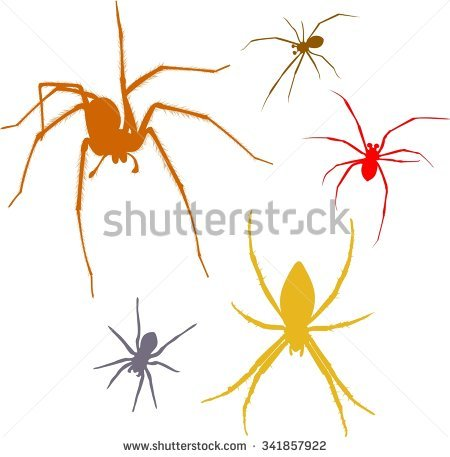 Mediterranean Black Widow Stock Photos, Royalty.