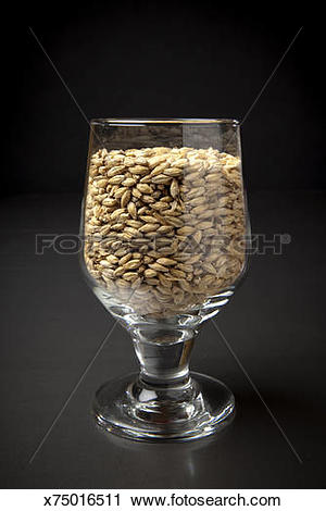 Stock Photography of Beer Glassware filled with Malted Barley.