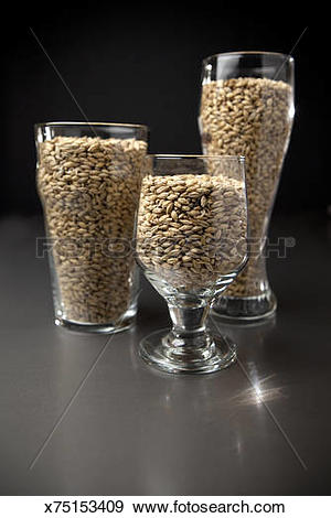 Stock Photograph of Beer Glassware filled with Malted Barley.