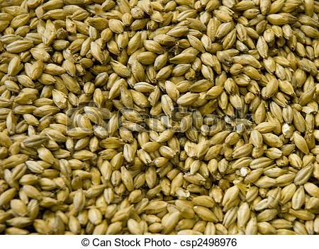 Stock Image of Malted Barley grains csp2498976.