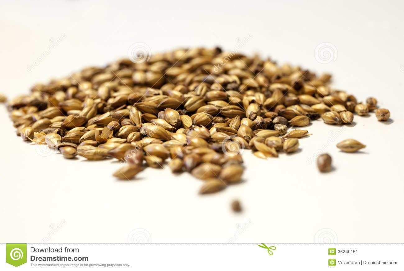 Barley Malt Royalty Free Stock Image.