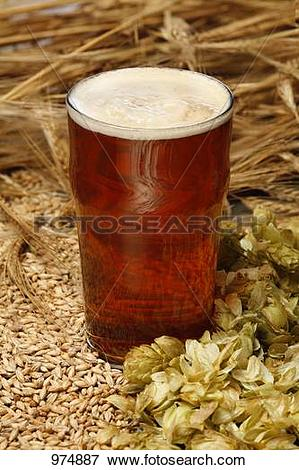 Picture of A glass of ale with malted barley and hops 974887.