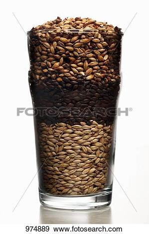 Stock Photograph of Pint beer glass filled with malted barley.