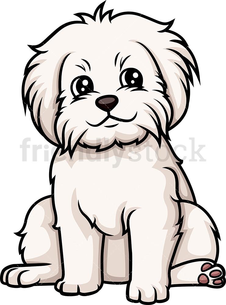 Cute Maltese Puppy.
