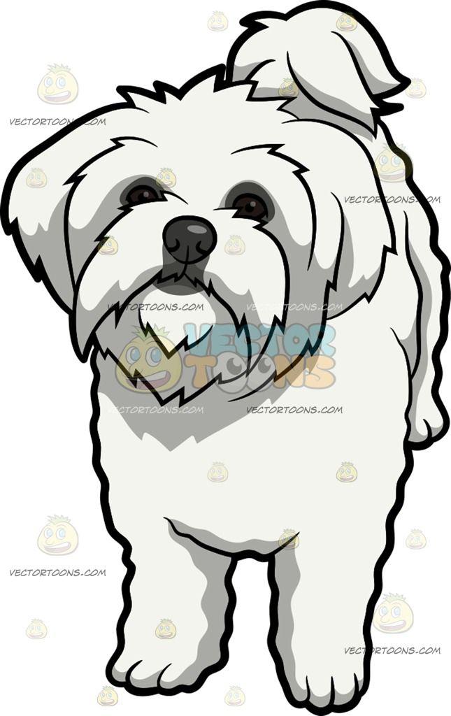 Maltese Dog Clipart.