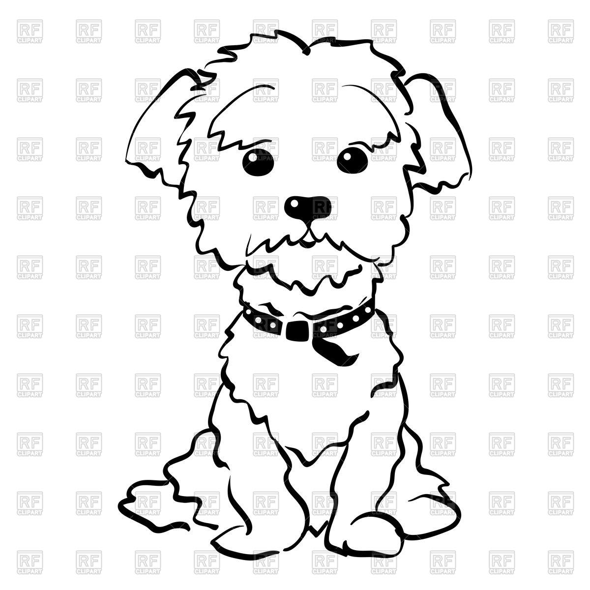 Funny dog maltese breed Stock Vector Image.
