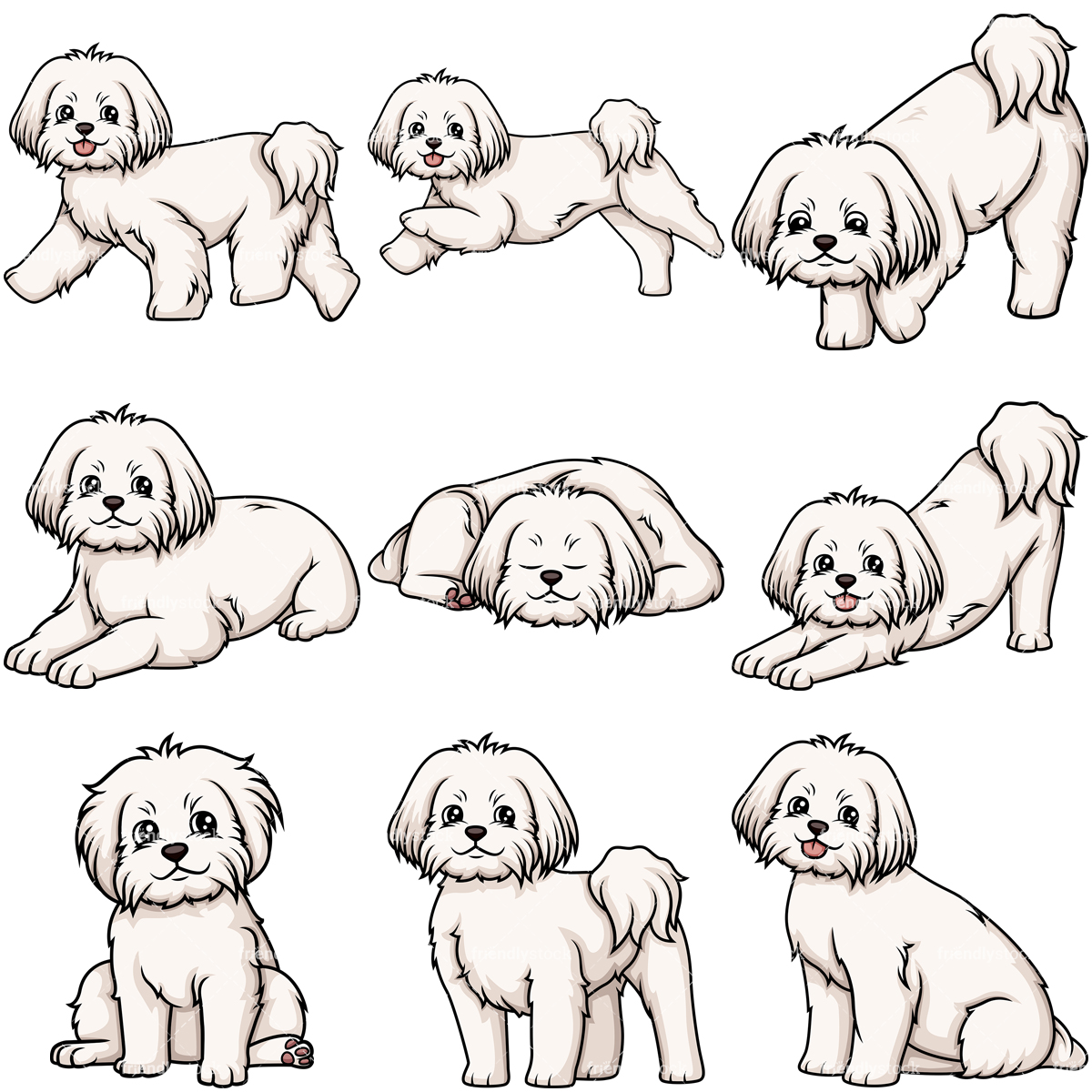 Maltese Dogs Collection.