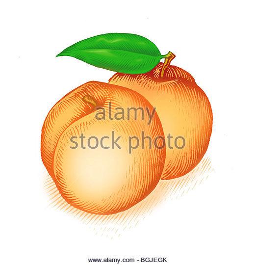 Malum Stock Photos & Malum Stock Images.