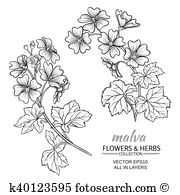 Malva sylvestris Clipart Illustrations. 7 malva sylvestris clip.