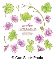 Malva Clipart and Stock Illustrations. 77 Malva vector EPS.