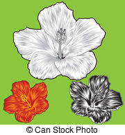 Malvaceae Vector Clipart Illustrations. 125 Malvaceae clip art.