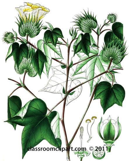 Illustrations : plant.