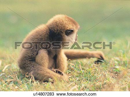 Stock Photo of grass, hair, jungle, mammal, nature, animal.
