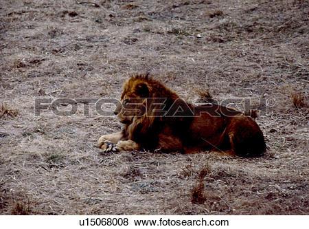 Pictures of vertebrate, landscape, animal, scene, nature, mammal.