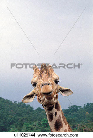 Stock Photo of nature, grasslands, pattern, mammal animal, jungle.