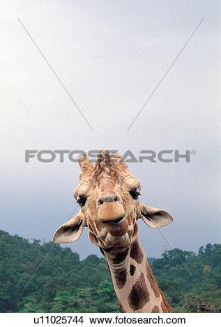 Stock Photo of nature, grasslands, pattern, mammal animal, jungle.