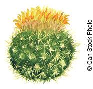 Mammillaria Clip Art and Stock Illustrations. 4 Mammillaria EPS.