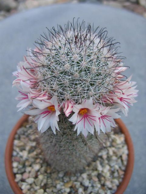 1000+ images about Cactii on Pinterest.
