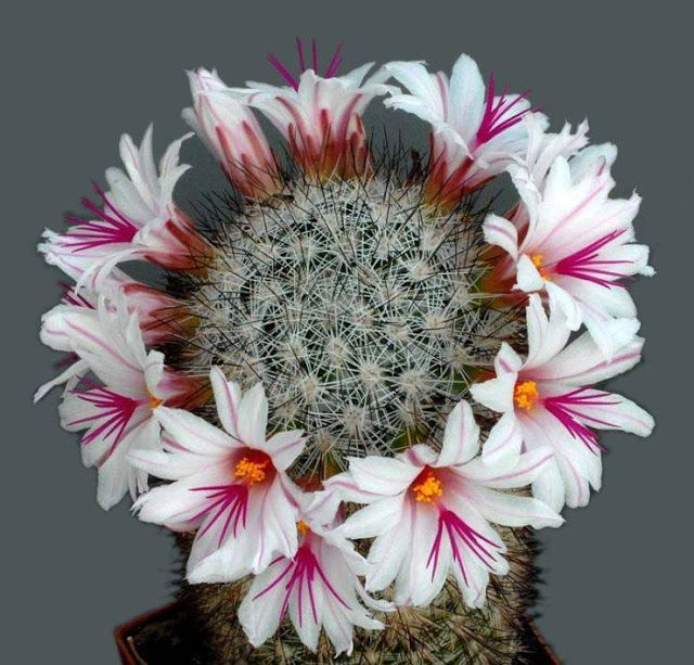1000+ images about MaMMillaRia on Pinterest.