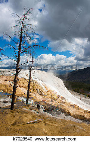 Stock Photography of Dead trees at Mammoth Hot Springs.
