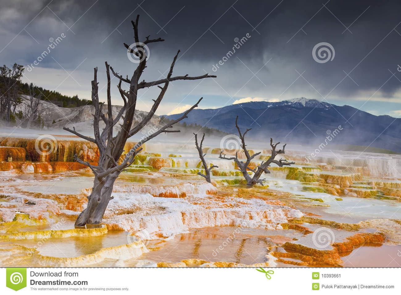 Main Terrace, Mammoth Hot Springs, Yellowstone Stock Image.