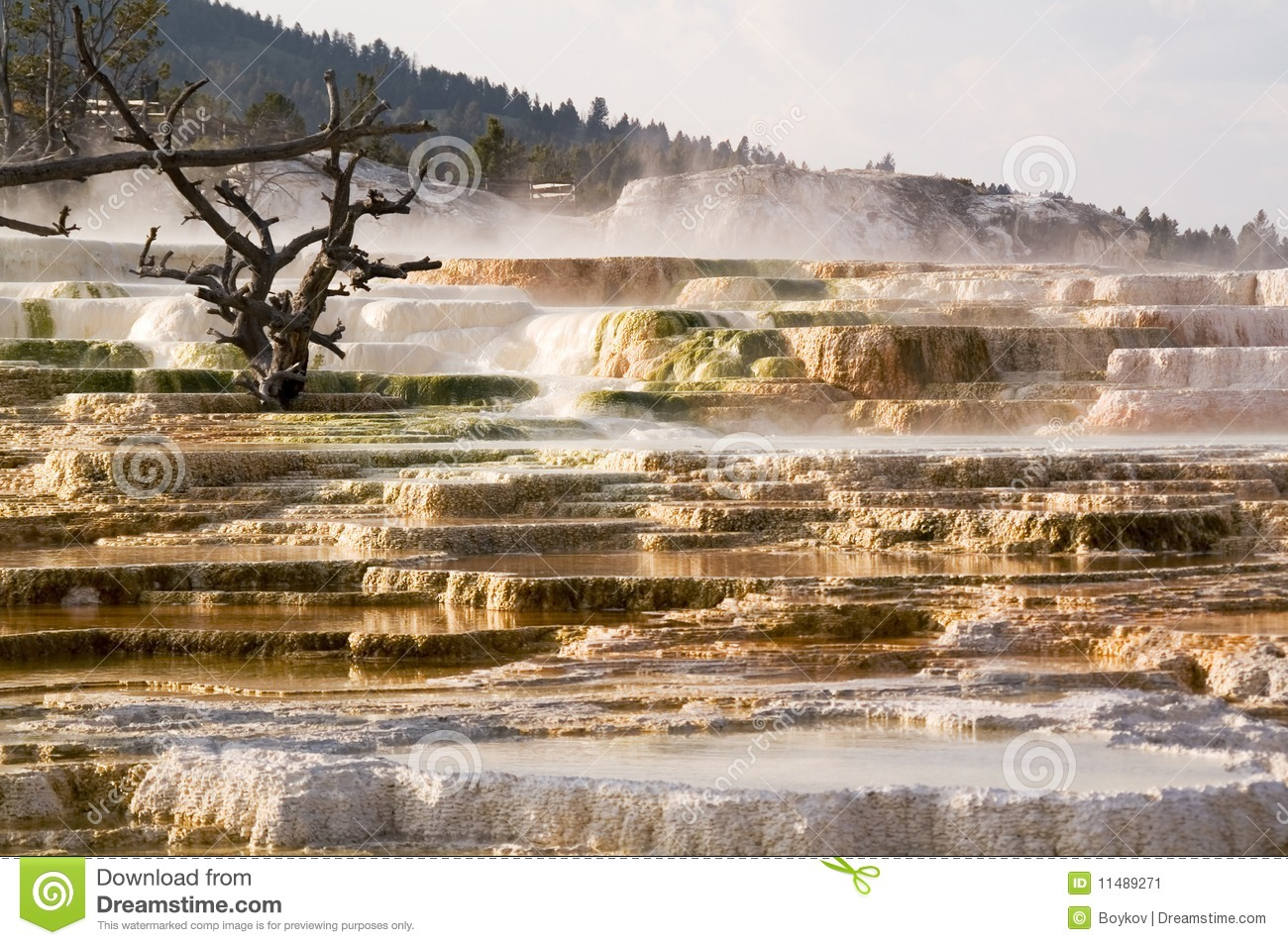 Yellowstone, Mammoth Hot Springs Terraces Stock Image.
