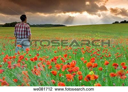 Stock Photo of Man watching storm clouds on a poppy field we081712.