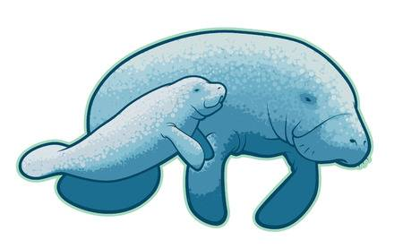 250 Manatee Cliparts, Stock Vector And Royalty Free Manatee.