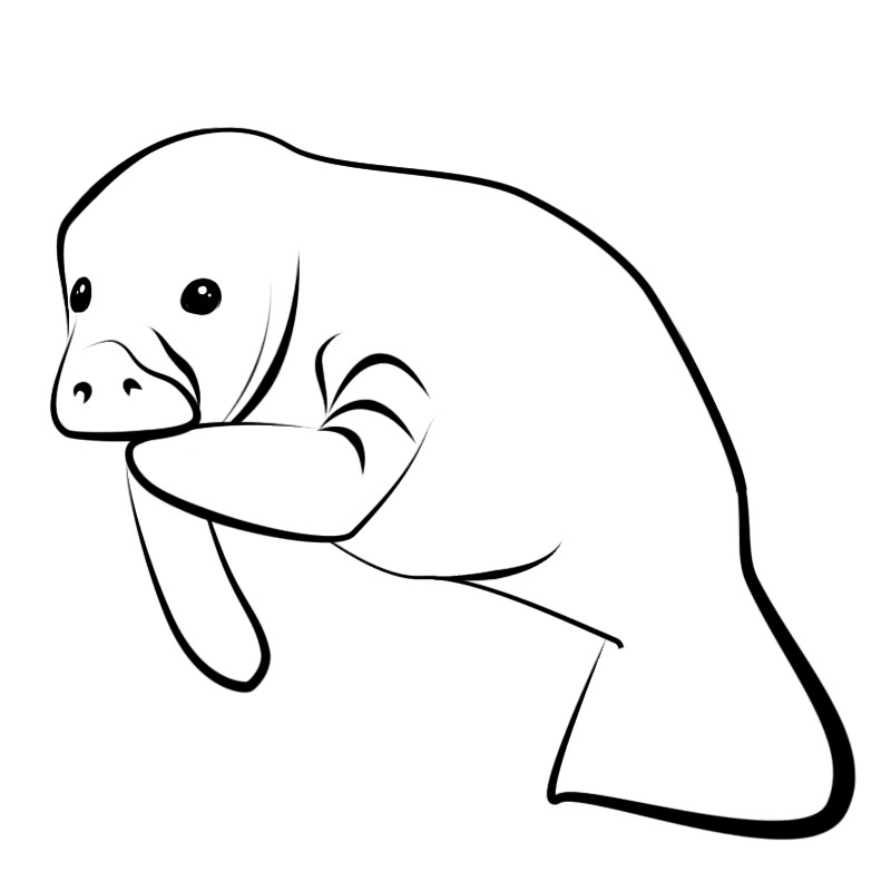 Free Manatee Clipart Black And White, Download Free Clip Art.