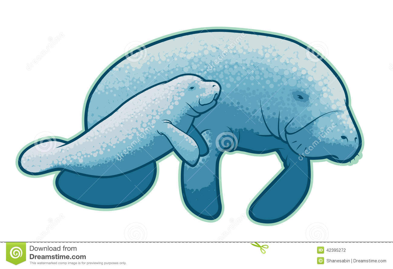 Manatee Stock Illustrations.