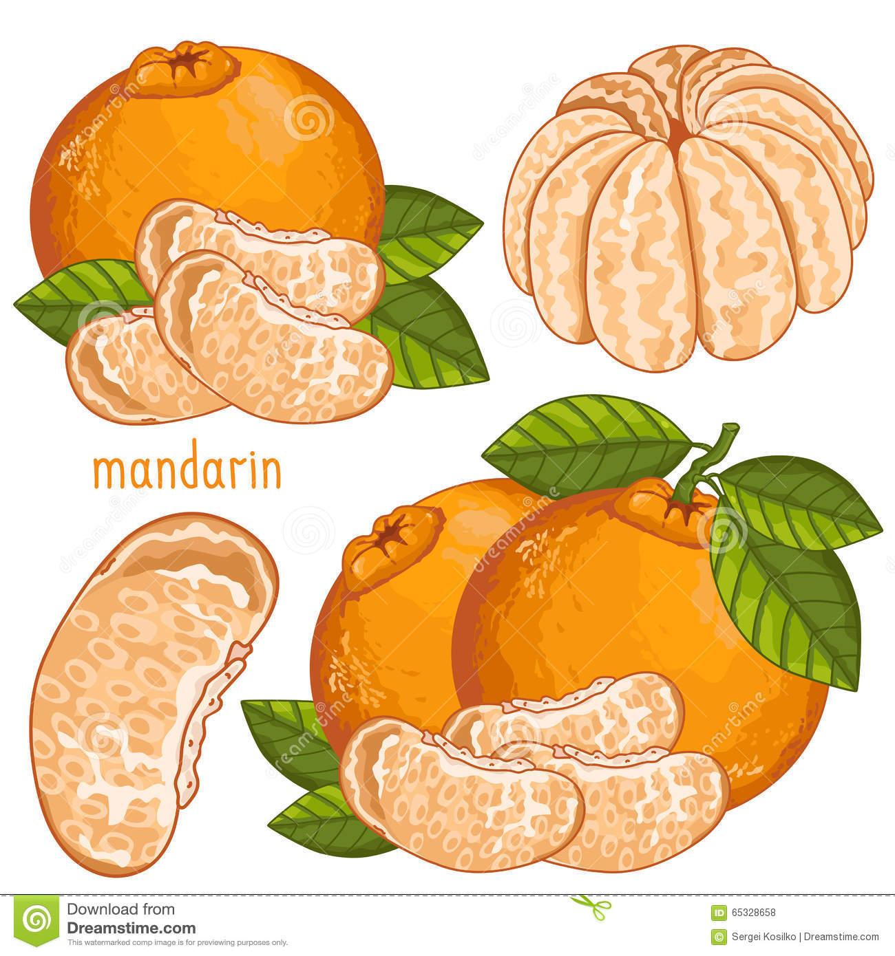 Fresh Juicy Tangerine 2c Mandarin Stock Illustrations.