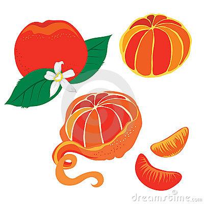 Green Mandarin Stock Illustrations.