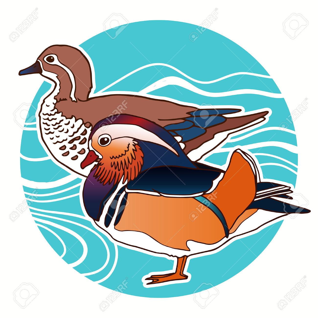 Mandarin Duck Vector Illustration Royalty Free Cliparts, Vectors.