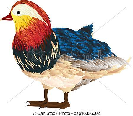 Mandarin duck Clip Art Vector and Illustration. 43 Mandarin duck.