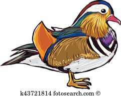 Mandarin duck Clip Art and Illustration. 45 mandarin duck clipart.