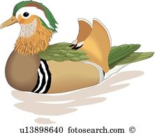 Mandarin duck Clipart EPS Images. 42 mandarin duck clip art vector.