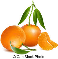 Mandarin orange Illustrations and Clipart. 1,967 Mandarin orange.