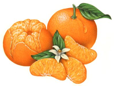 1000+ images about Orange Illustrations on Pinterest.