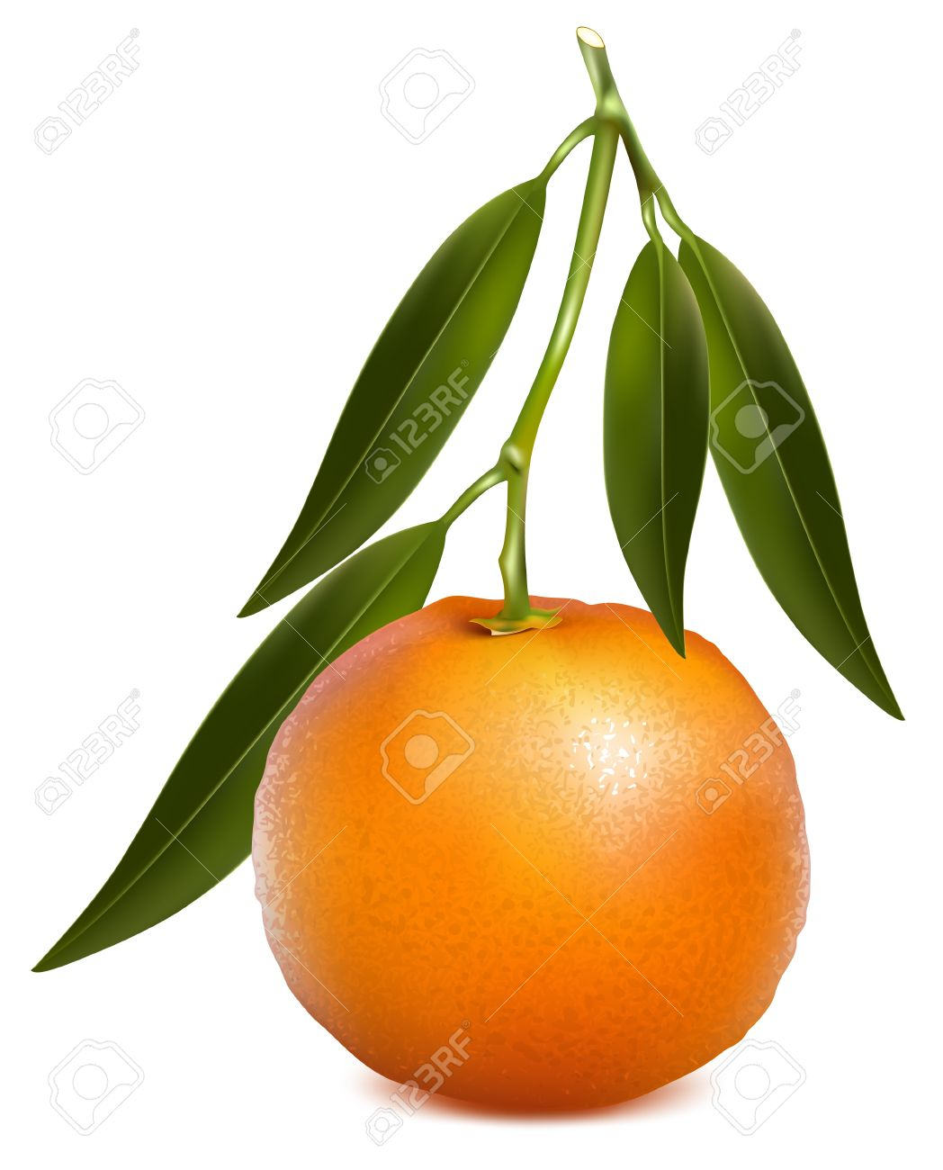 3,670 Mandarin Orange Stock Vector Illustration And Royalty Free.