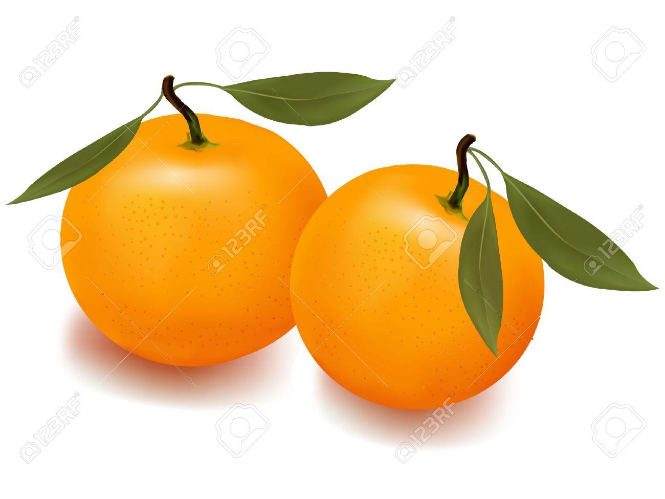 Mandarin Oranges Clipart.