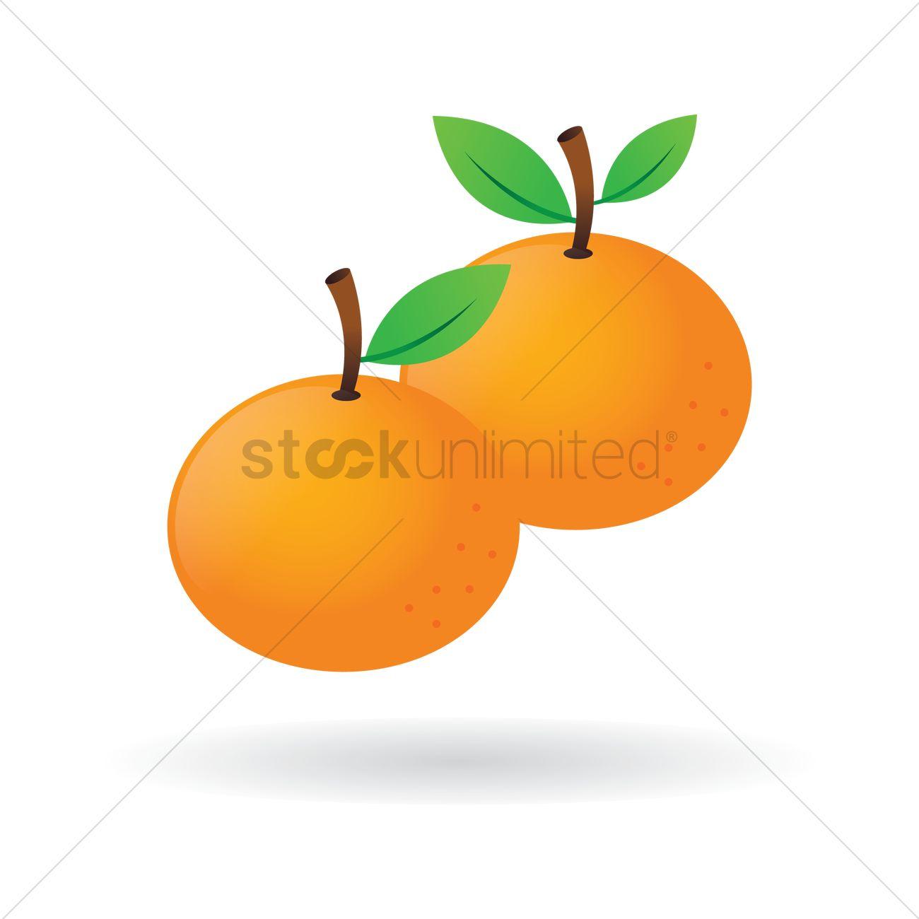 Mandarin oranges Vector Image.