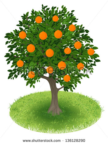 Orange Fruit Tree Stock Photos, Royalty.